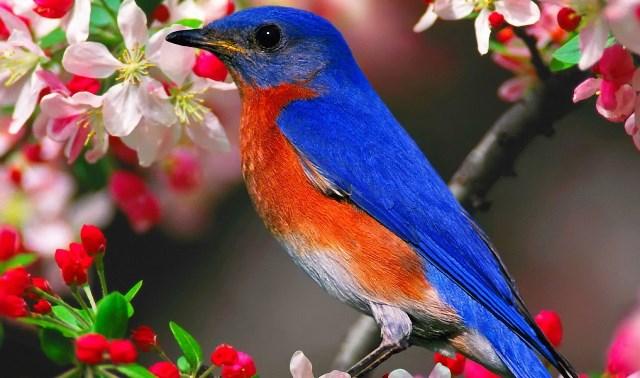 Jalisco documenta 557 especies de aves pertenecientes a 80 familias