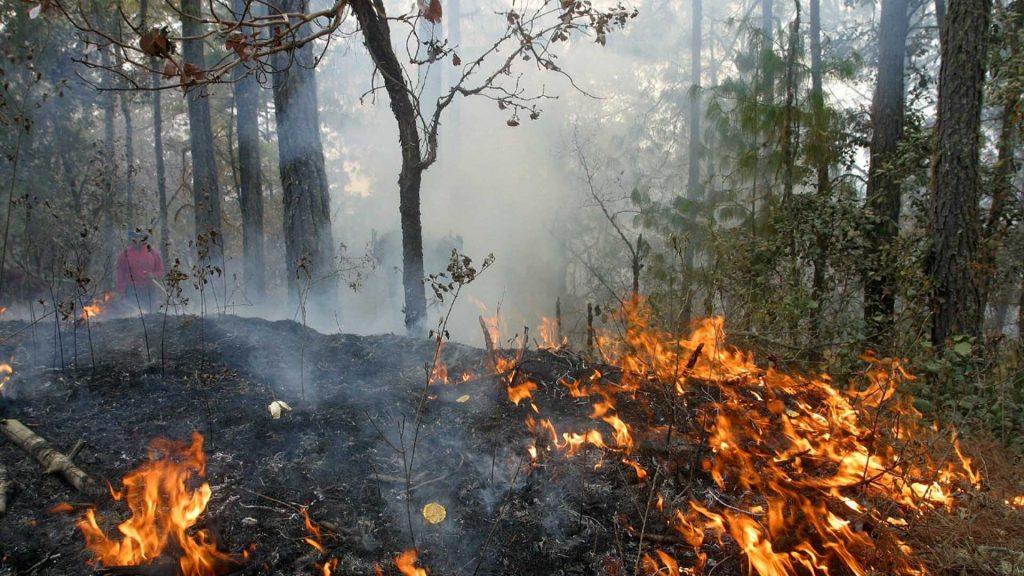 Incendios forestales afectan sólo en 4% de arbolado y renuevo