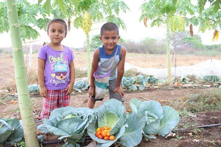 Labor de legislativa es fundamental para avanzar en el derecho a alimentación