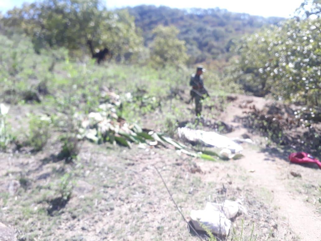 Militares destruyen plantíos de marihuana en Mascota