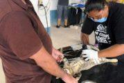 Alistan jornada de esterilización masiva en Puerto Vallarta
