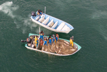 Defensa de la vaquita marina: Se registra nuevo ataque a embarcación de activistas