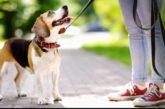 ¿Cómo limpiar y desinfectar las patitas de tu perro tras volver de la calle?