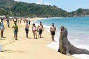 La naturaleza ofrece un espectáculo inédito en las costas de San Pancho