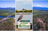 Observa aves desde Riviera Nayarit en el Global Bird Weekend 2020