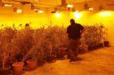 Desmantelan invernadero de marihuana en Puerto Vallarta