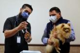 Arranca en Jalisco campaña de vacunación antirrábica canina y felina 2020