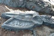 Hallan esqueleto de ballena casi intacto; tendría unos 3 mil años