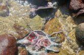 Reportan matanza de tortugas en Cabo Corrientes