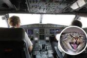 Un gato ataca al piloto de un avión y obliga a hacer un aterrizaje de emergencia