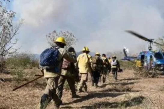 Al menos 15 brigadistas heridos durante combate a incendio en La Primavera