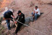 Van 51 casos de maltrato animal en Puerto Vallarta