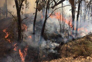 Activan alerta atmosférica en Ameca y Tala por incendio en La Primavera