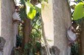 ¡Abuelita maravilla! Doña Menchita trepa árbol para cortar fruta