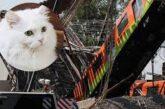 Gato sobrevive al accidente del Metro; viajaba en la Línea 12 luego de ser esterilizado