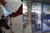 Detienen a un perro que enviaba cartas entre presos de una cárcel