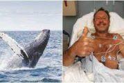 "Una ballena se ""traga"" a un pescador frente a Massachusetts, EU; lo escupe vivo"