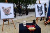 Fiscalía catea domicilio de persona que presuntamente envenenó a Ahtos y Tango, perros rescatistas