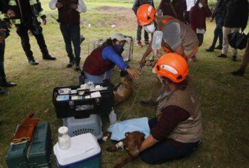 ¡Todos a salvo! Rescatan a los 'lomitos' que cayeron al socavón en Puebla