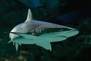 Uno de los inventos de Tesla estaba 'oculto' en las entrañas de los tiburones