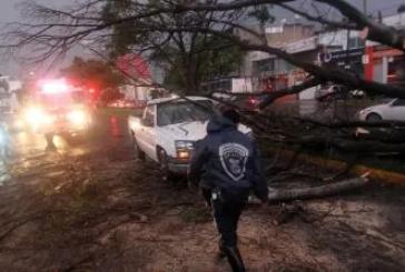 Lluvias en Jalisco: Reportan cerca de 19 árboles caídos en Zapopan y Guadalajara