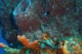 Encuentran fósiles que podrían ser la forma de vida animal más antigua del planeta