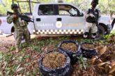 Guardia Nacional asegura droga en Tomatlán